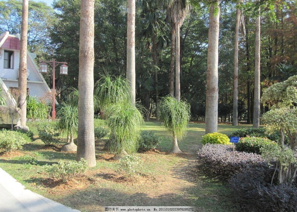 福州国家森林公园 福州 森林 公园 榕树 花草树木 国家森林公园(福建