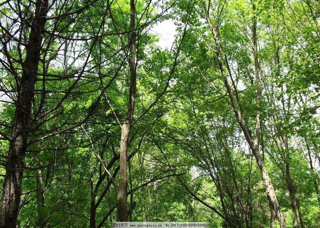 树林 树 森林 树木树叶 生物世界 摄影 96dpi jpg