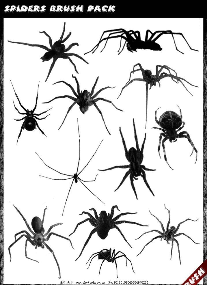 蜘蛛笔刷 蜘蛛 笔刷 小蜘蛛 蝎子毒蝎 节肢动物 网虫 扁蛛 园蛛 八脚
