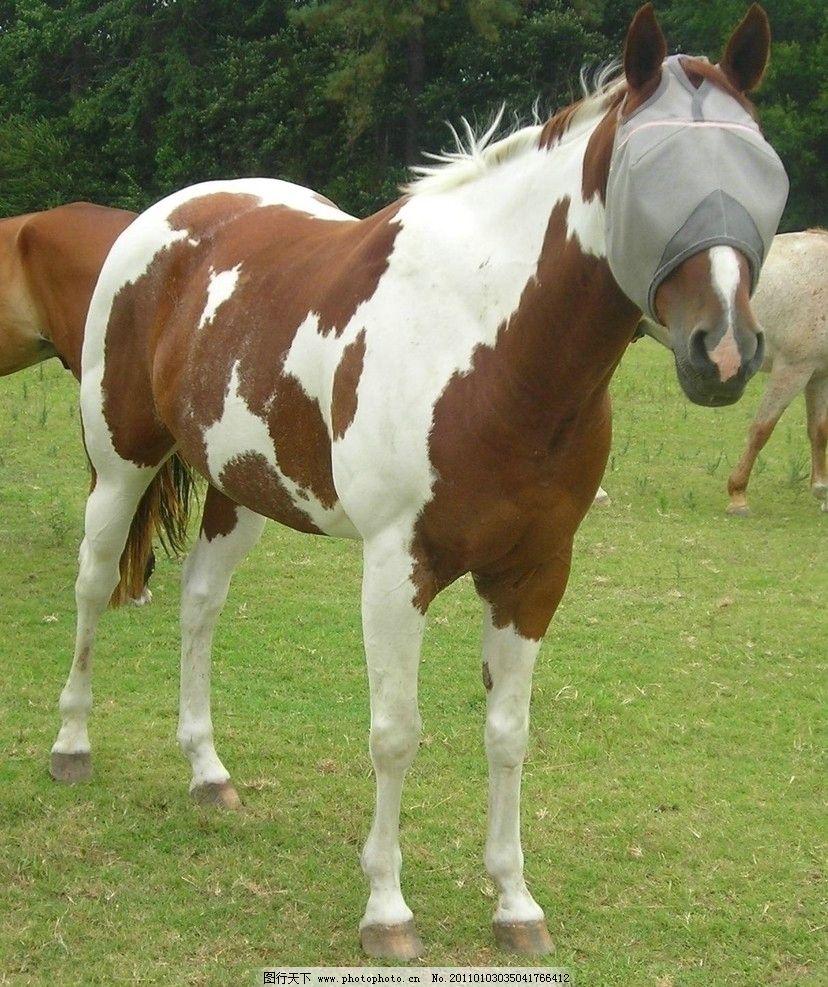 栗色马 骏马 动物图片 动物摄影 陆地动物 哺乳动物 草地上的马 马