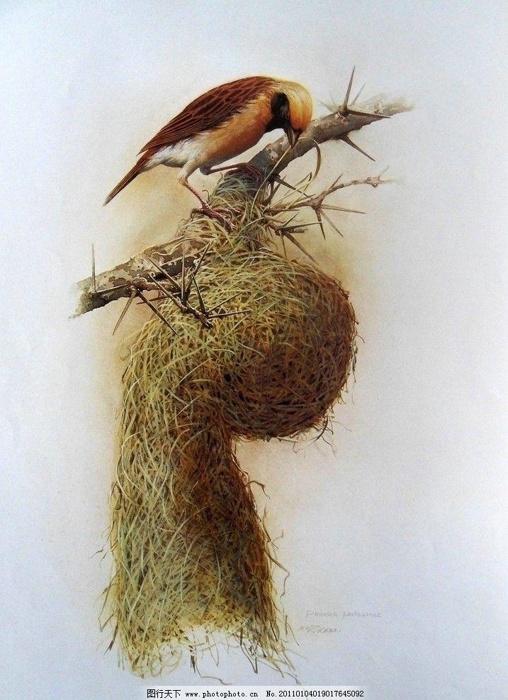 工笔画 国画 花鸟 绘画 精细 传统 中国画 曾孝濂 工笔花鸟精品