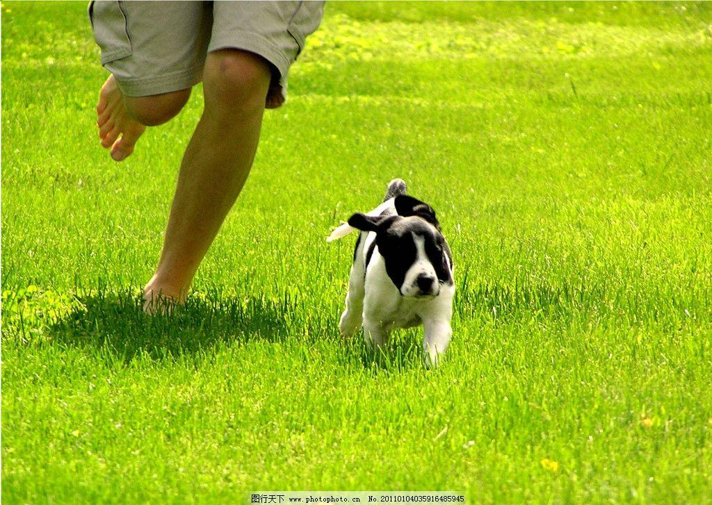 奔跑的狗狗 动物 家畜 跑 户外 草 绿色 人物 狗 自由 活力 生物世界