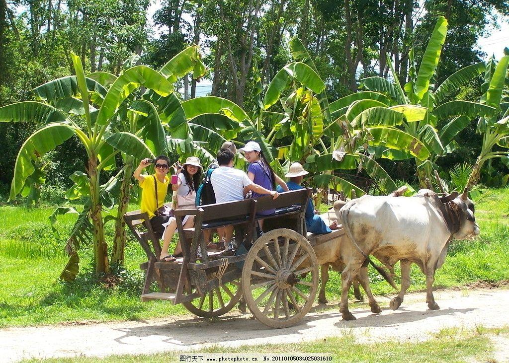 泰国普吉岛风光之牛车图片