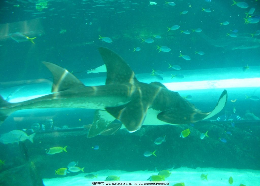 鲨鱼 海底 鱼群 海底世界 鱼类 海洋生物 摄影图库 摄影 水族 生物