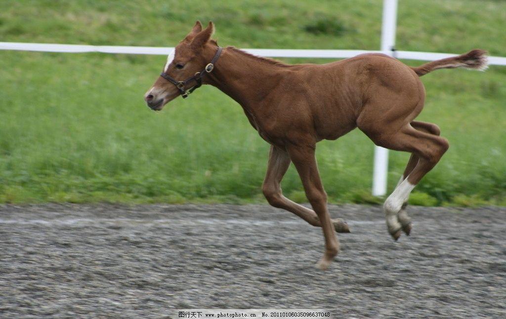 奔跑的小马图片 奔跑的马 马 草场 马场 天空 生物世界 野生动物 摄影