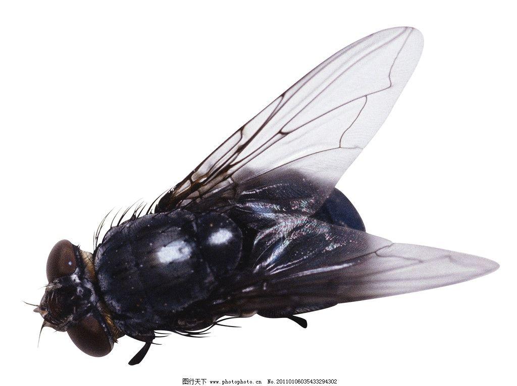 甲虫 昆虫 生物世界 蚊子 苍蝇 小虫子 动物 其他生物 动物百科 摄影