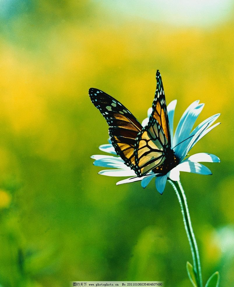 甲虫 昆虫 生物世界 蝴蝶 花朵 鲜花 草地 小虫子 其他生物 动物百科
