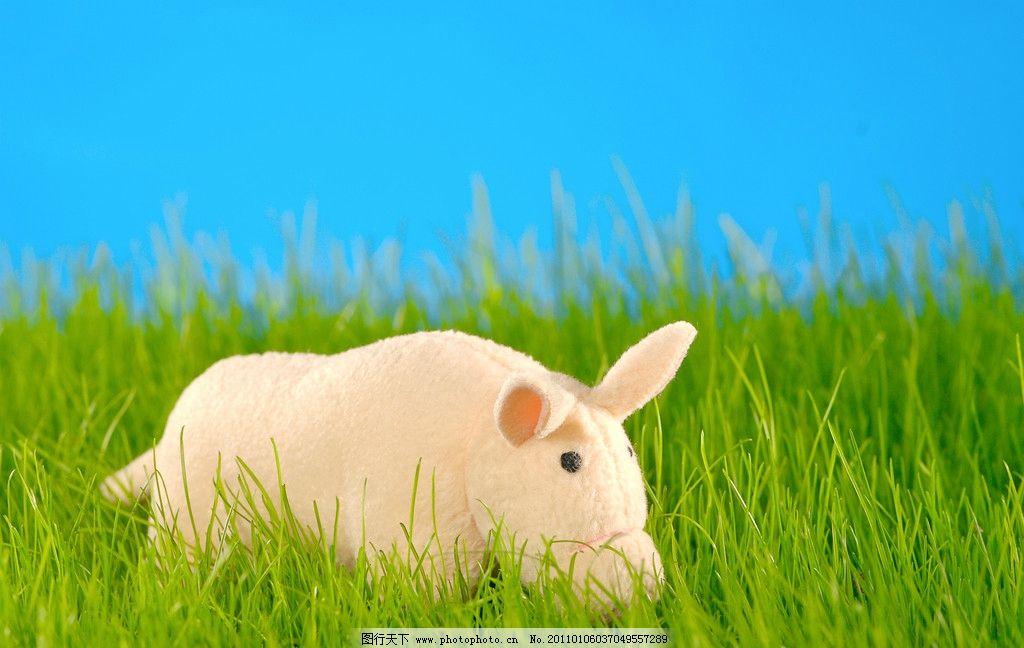 小猪图片 可爱的小猪 可爱 动物 草地 猪头 写真 毛绒玩具 可爱的小