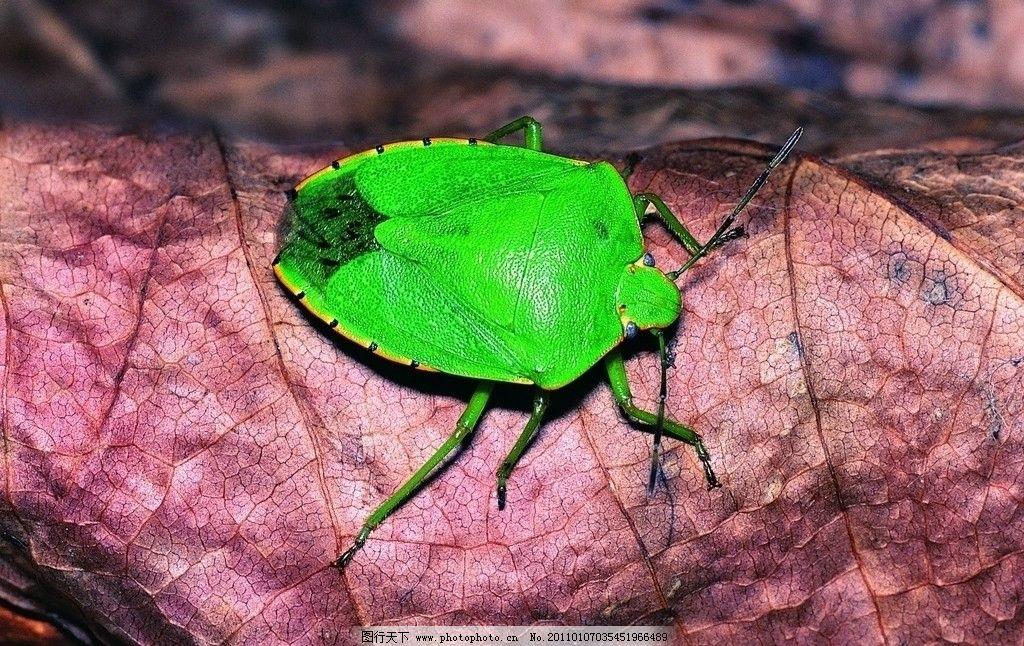 甲壳虫 昆虫 生物世界