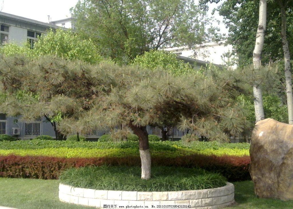 南开大学风景 南开大学 风景 生态 自然 草地 绿树 园林建筑 建筑园林
