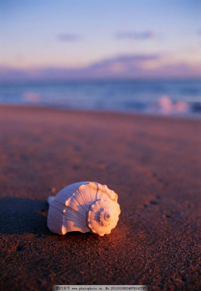 沙滩上的海螺图片_自然风景_自然景观_图行天下图库