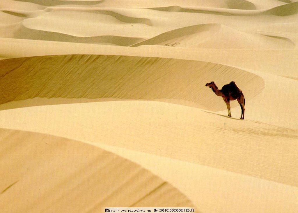 骆驼与沙漠 沙漠 动物 骆驼 野生动物 生物世界 摄影 100dpi jpg