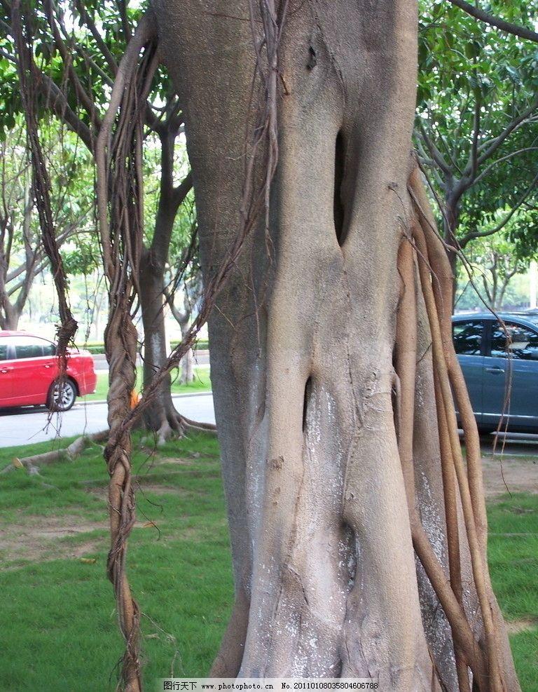 树根 树干 车 草地 树叶 树木树叶 生物世界 摄影 230dpi jpg