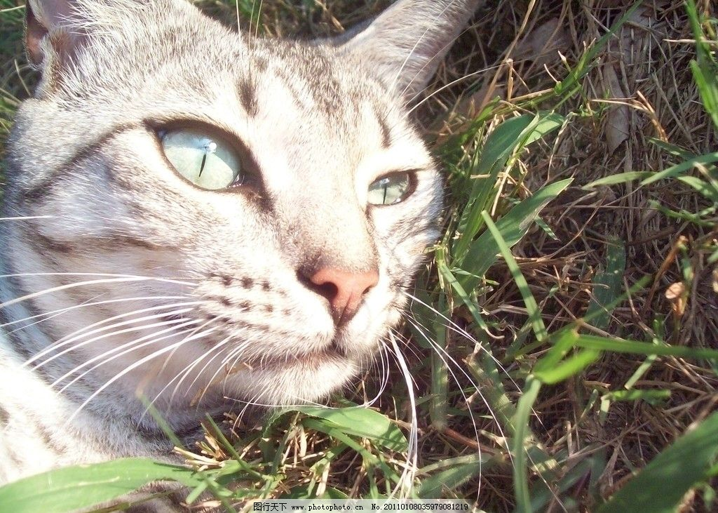 小猫 可爱小猫咪 小花猫 可爱的小猫 动物 宠物 摄影