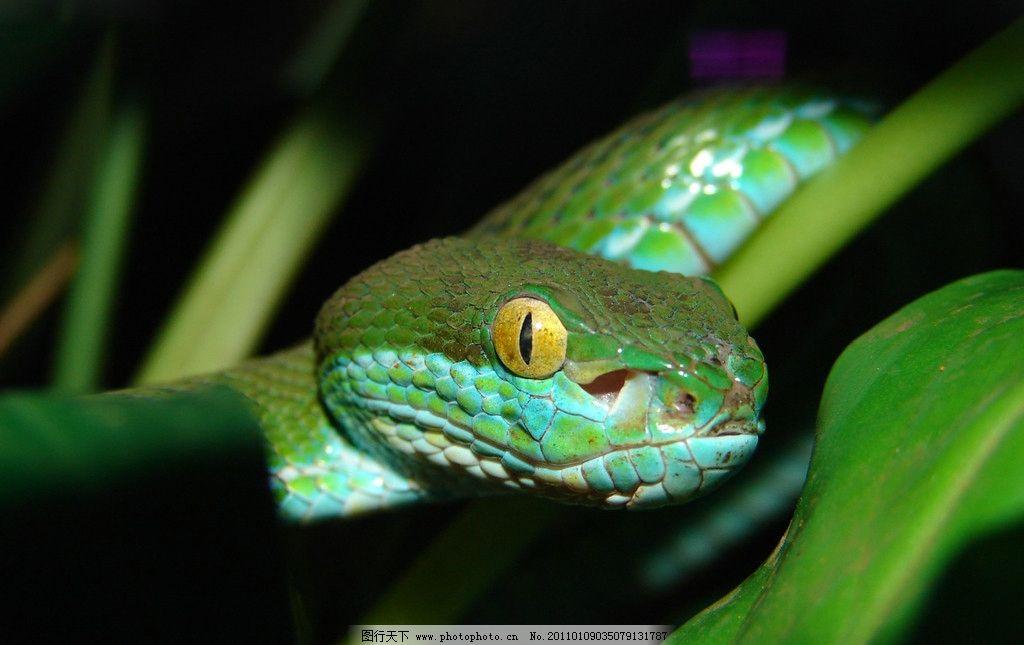 绿蛇 绿 蛇 冷血 动物 爬行 鳞片 毒 高清 摄影 素材 动物世界 野生