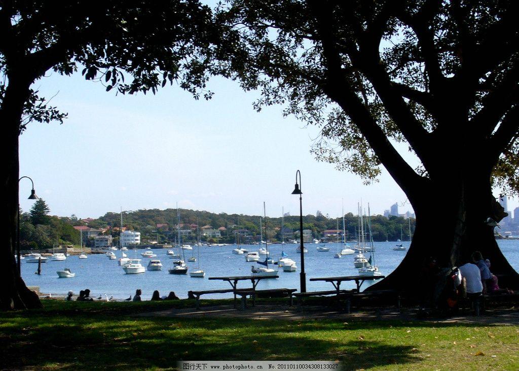 海边 岸边 绿草 蓝天 海湾 海水 摄影 自然风景 摄影图库 大树