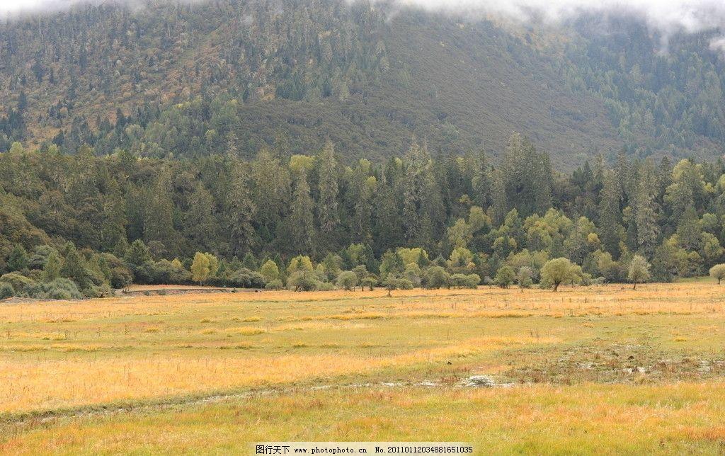 草场 西藏 青藏高原 树林 秋天 高山 黄色 自然风景 自然景观 摄影