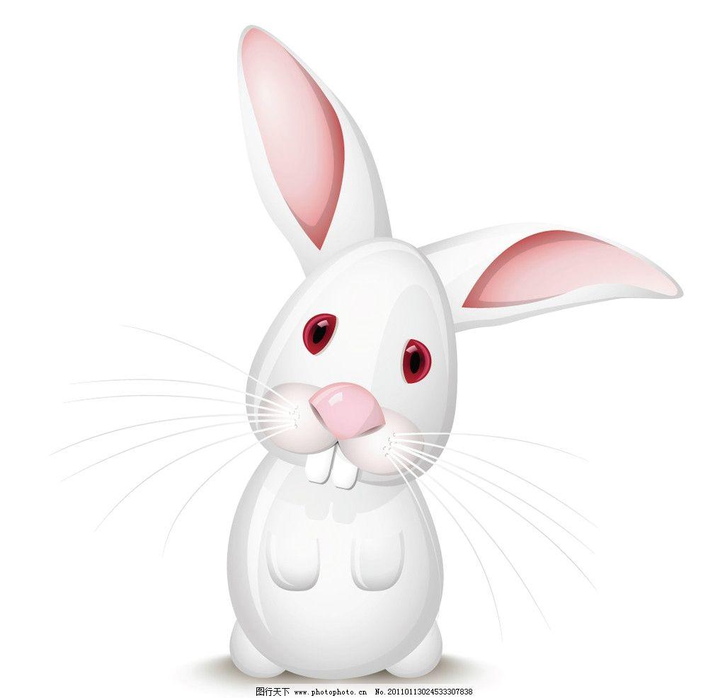 可爱小白兔图片