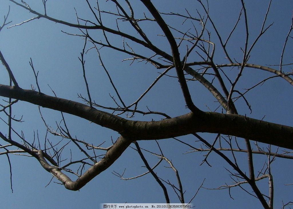 树枝 蓝天 秋枝 树木树叶 生物世界 摄影 230dpi jpg