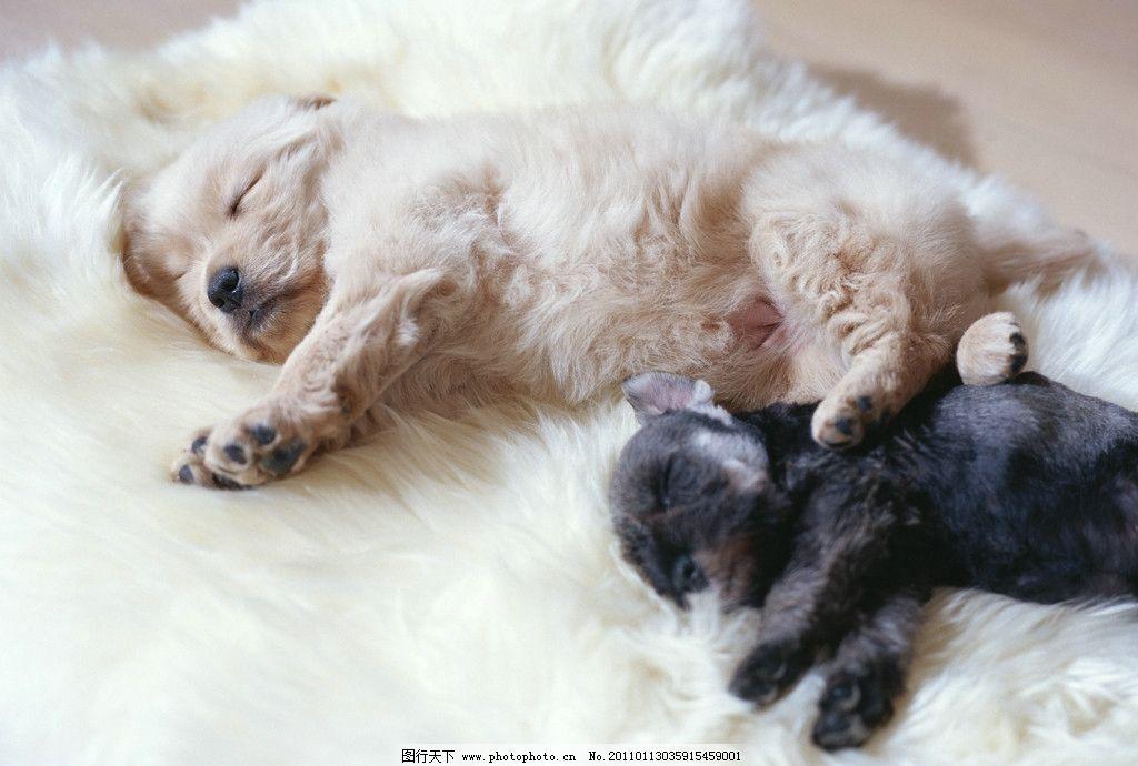 两只在睡觉的小狗图片
