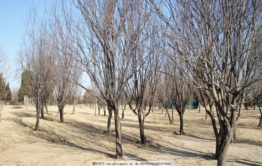 保定植物园 保定 植物园 冬季 冬天 小树 小树林 枯草地 保定风情