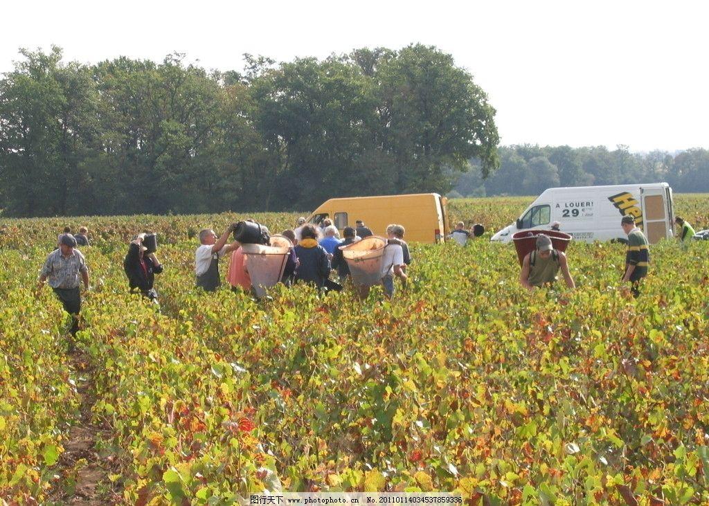 法国葡萄酒 手工葡萄酒 葡萄酒庄园 田园风光 自然景观 摄影 180dpi