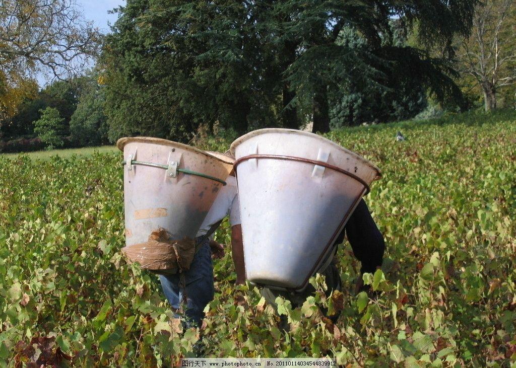 法国手工葡萄酒 法国葡萄酒 手工葡萄酒 葡萄酒庄园 田园风光 自然