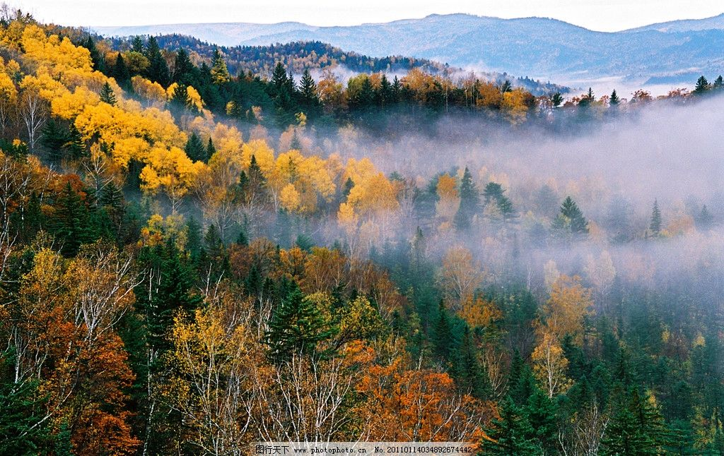 伊春森林 山林 丛林 树林 树木 秋天 云雾 自然风景 自然景观