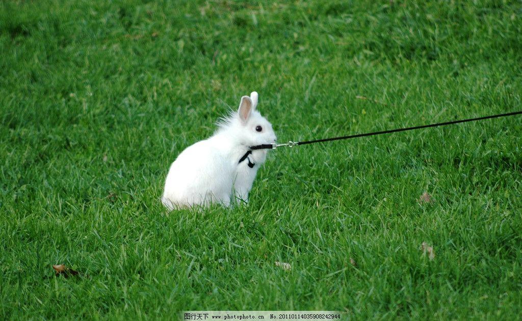 可爱动物萌萌哒兔