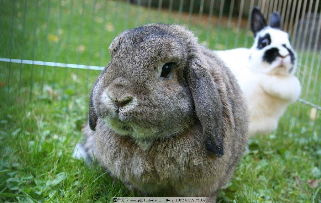 兔子 兔子高清图片 家兔 小兔子 笼子 花草 铁笼 可爱 宠物