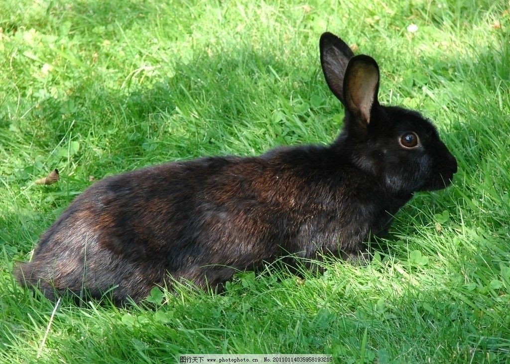 可爱黑兔子图片gif
