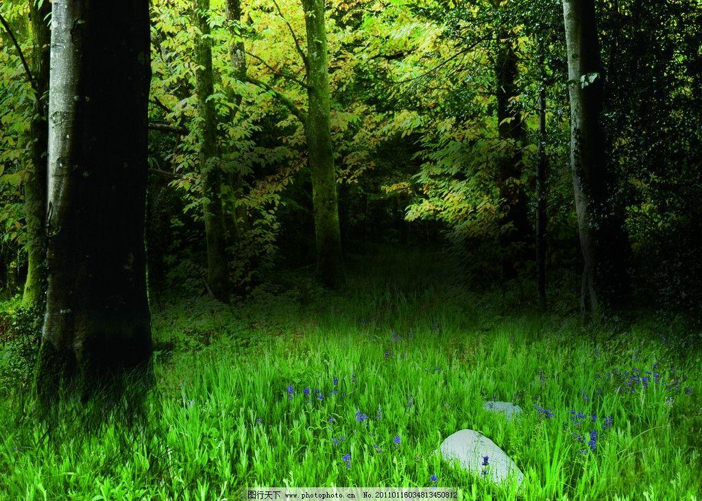 幽静森林图片,原始 绿色 大树 草地 自然风景 自然-图