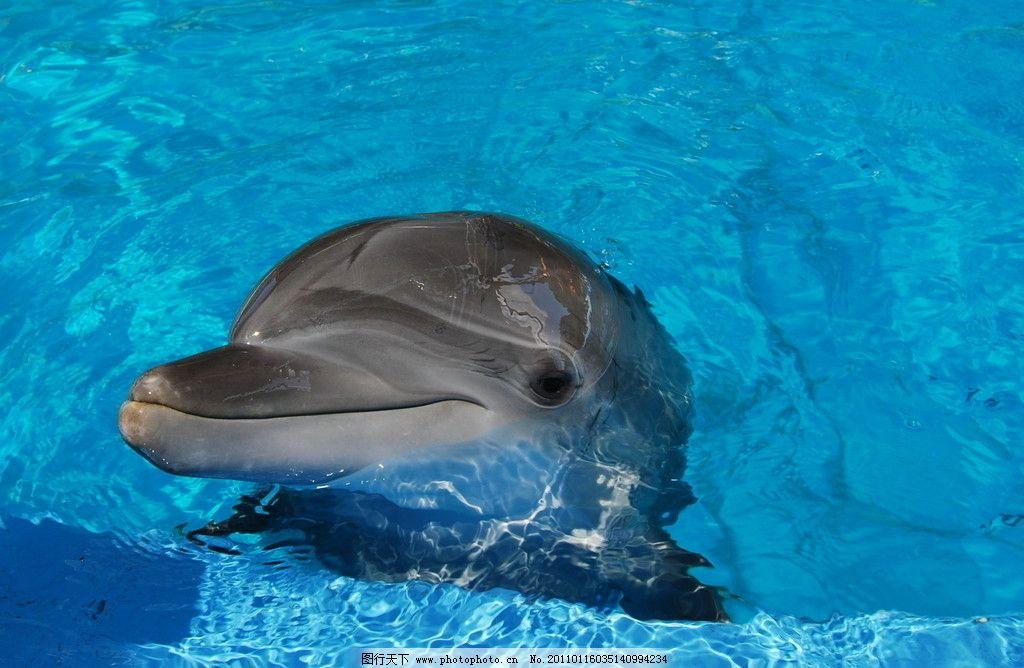嬉戏海豚 动物摄影 水中生物 可爱 清澈的水 海豚摄影 海豚素材