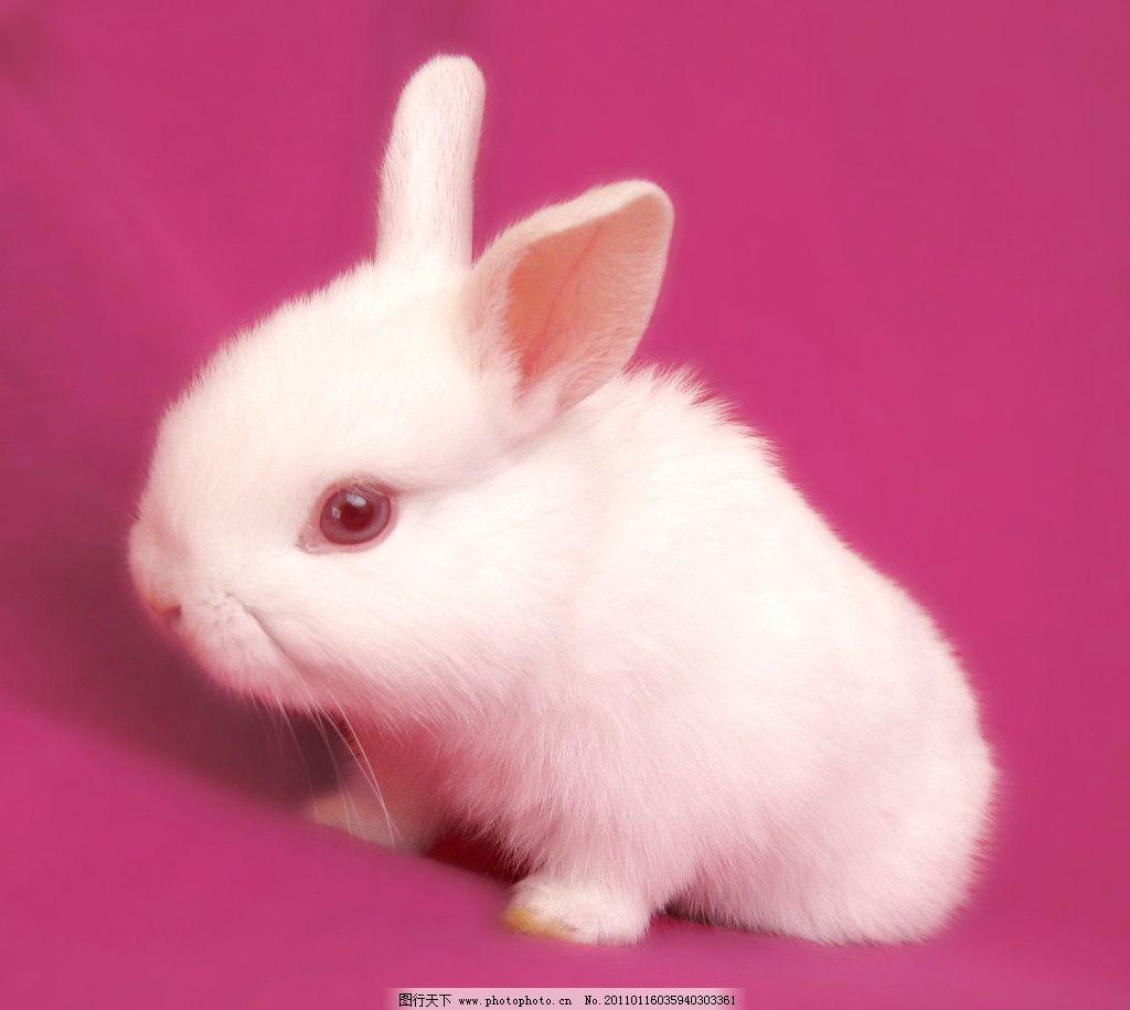 动物小兔子图片