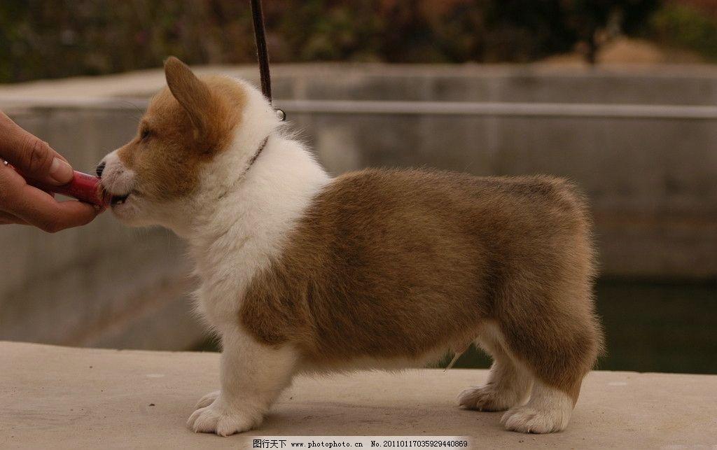 小狗狗 狗 可爱小狗 狗狗 吃东西的小狗 宠物 家禽家畜 生物世界 摄影