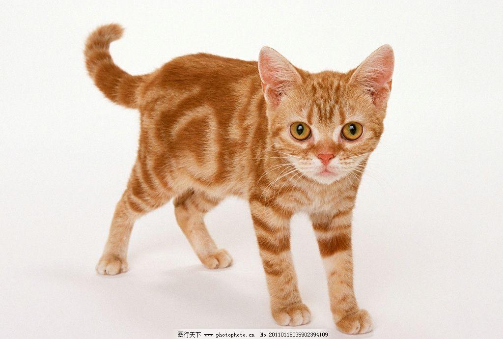 可爱小猫 小猫 小猫咪