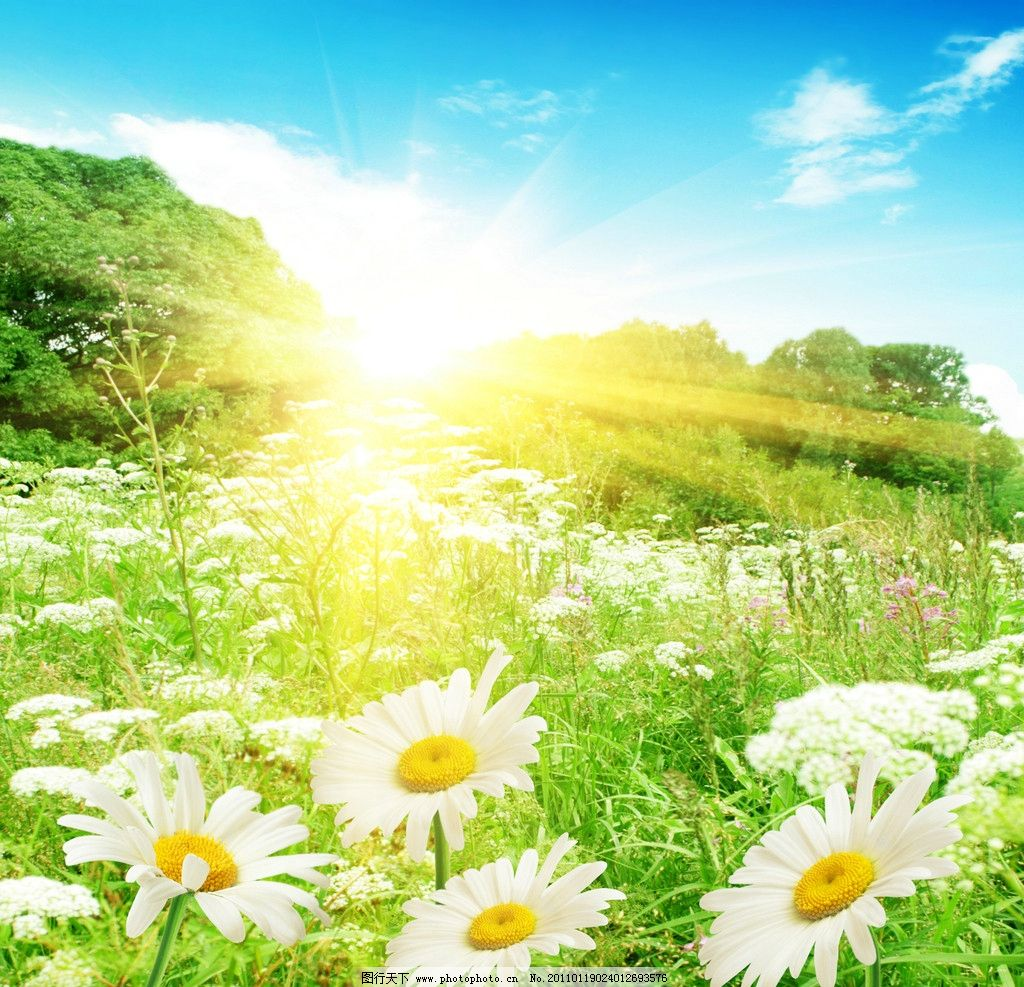 花草 草原 云彩 平原 陆地 风景 风光 大自然 高清 图片 自然风景
