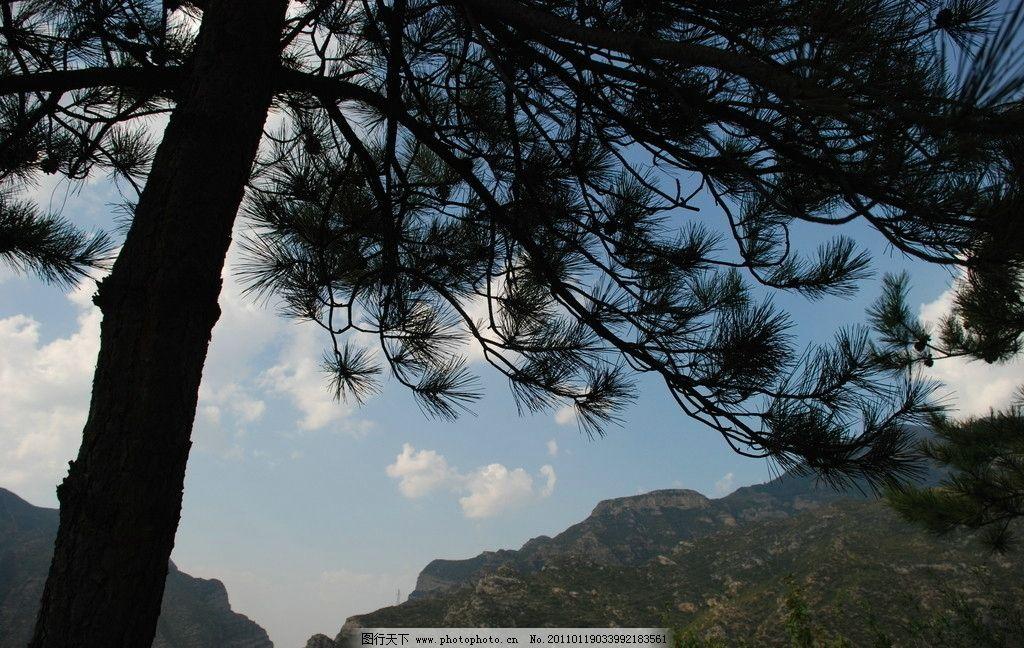 山西恒山松树 蓝天白云 天空 山峦起伏 山脉 国内旅游 旅游摄影