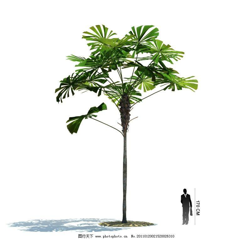 精美树木模型图片