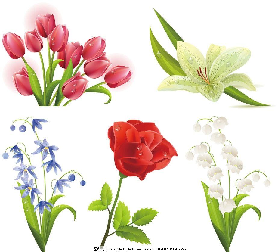 花草-春天的鲜花图片