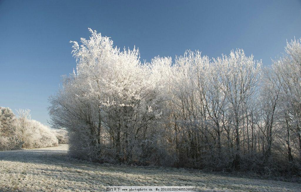 冬季松树林雪景图片_自然风景_自然景观_图行天下图库