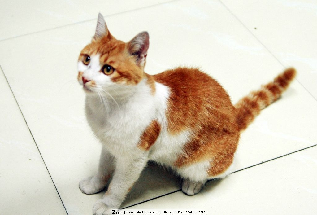 小花猫 花猫 地板 小猫 家禽家畜 生物世界 摄影 300dpi jpg