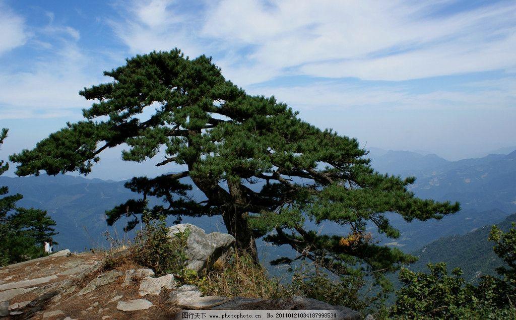 大别山迎客松 蓝天 白云 自然风景 旅游摄影