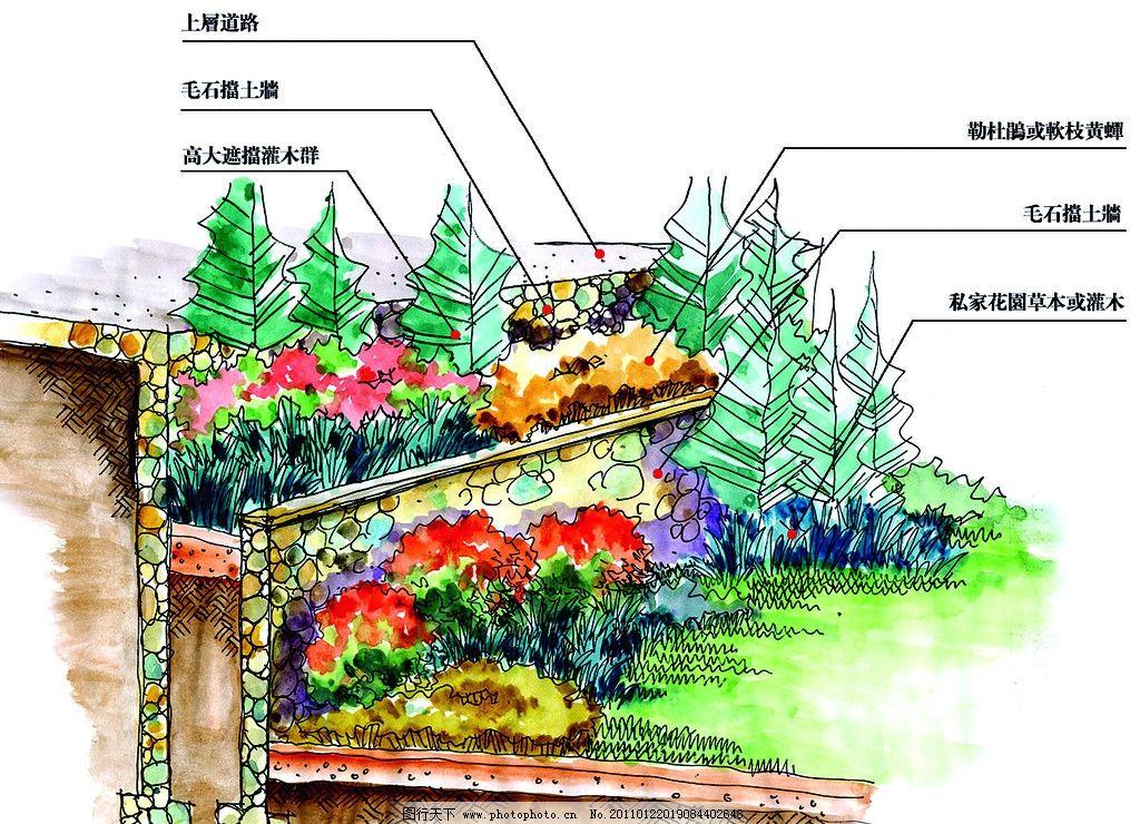 景观平面图 园林景观设计 公园景观 景观园林 景观规划 树木 植物