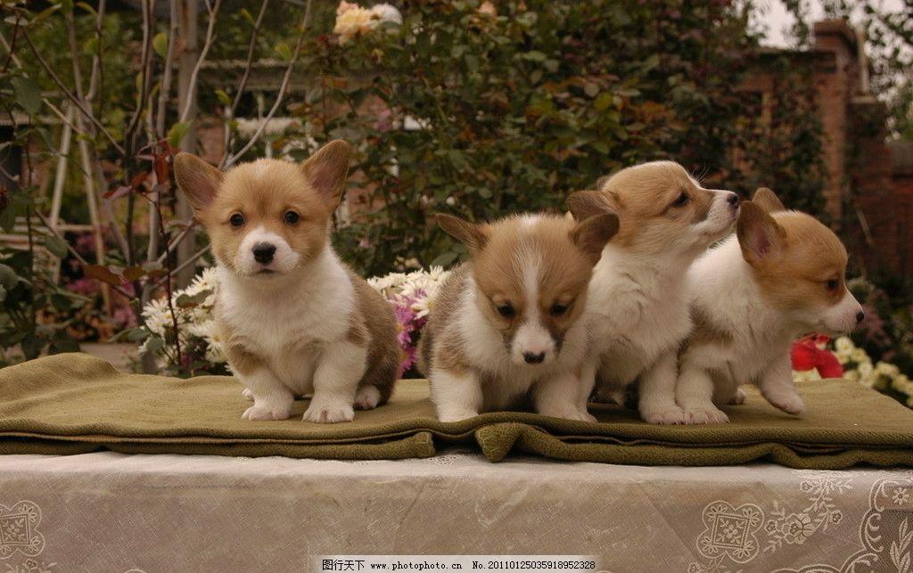 四只小狗 狗 可爱小花狗 不安分的四只小狗 宠物 家禽家畜 生物世界