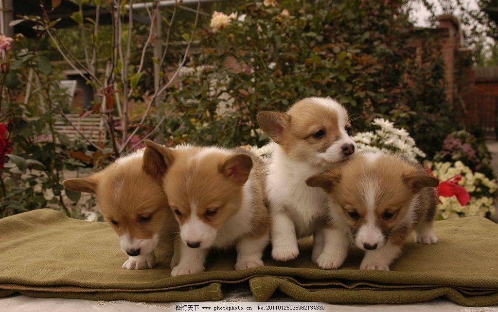 一群小狗狗 狗 四只小狗 可爱小花狗 宠物 家禽家畜 生物世界 摄影