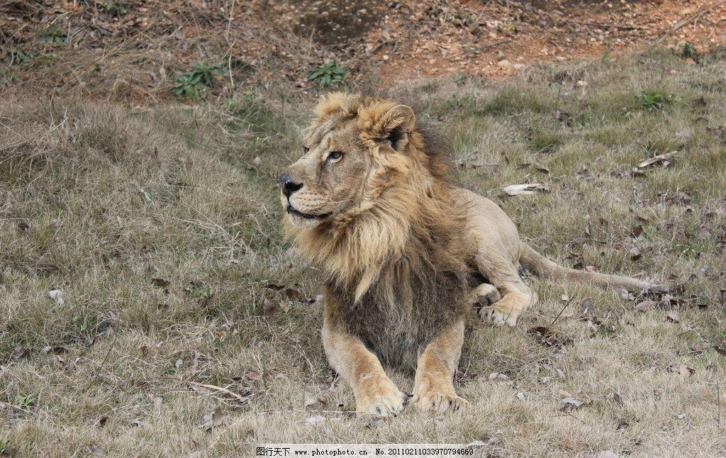 非洲雄狮 长沙动物园掠影 国内旅游 旅游摄影 摄影 72dpi jpg