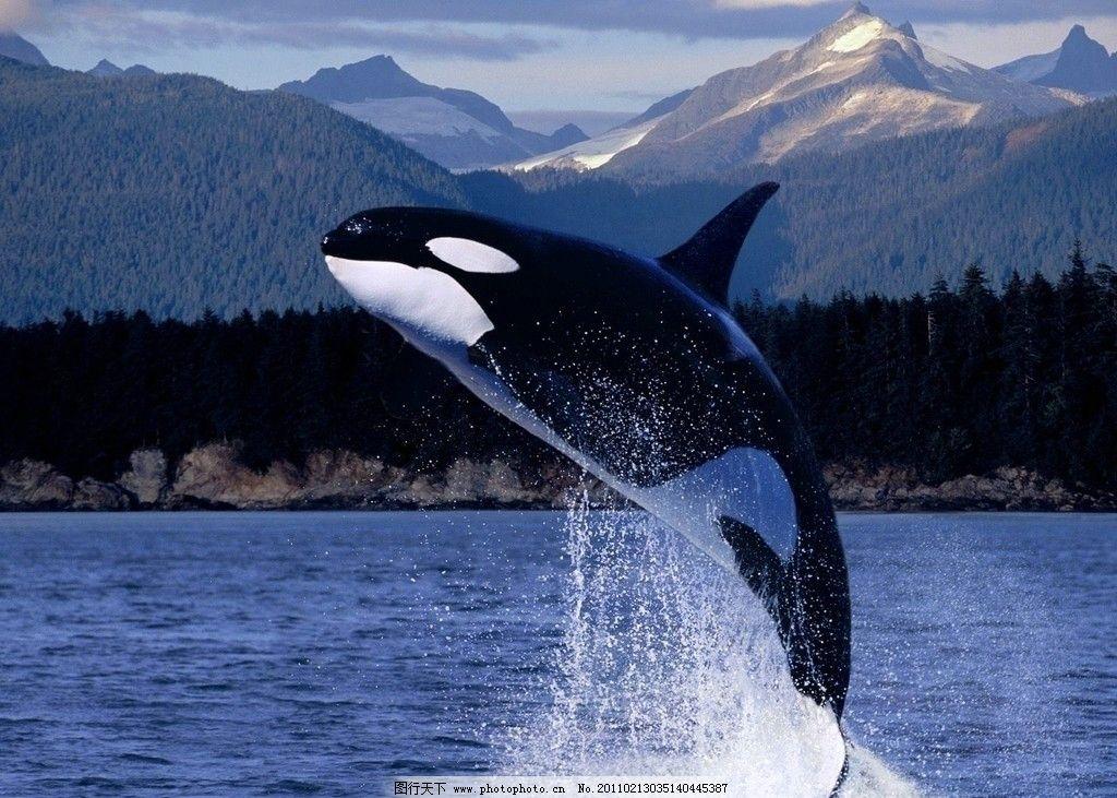 鲸鱼号填海造岛