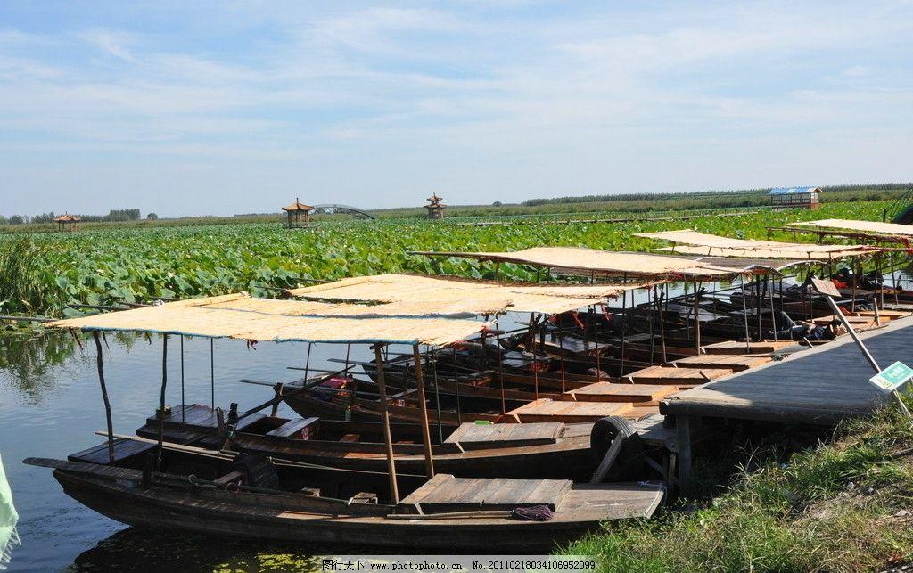 白洋淀 保定 船只 荷花 荷叶 湖水 木船 蓝天 自然风景 旅游摄影