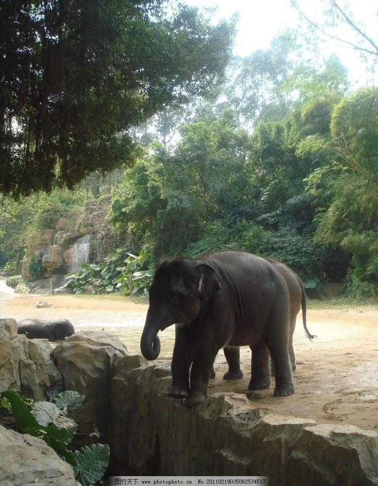 亚洲象 野生动物园 亚洲象要食 摄影